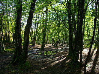 Paimpont forest - Interior of the Val sans retour in 2009