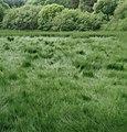 Vegetation on the reservoir flattened by the wind. - geograph.org.uk - 470536.jpg