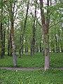 Veliky Novgorod, Novgorod Oblast, Russia - panoramio - ionyn (2).jpg
