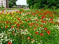 Verge flowers 13.JPG