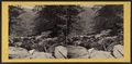 View from the top of the Five Cascades, looking down Haines Gorge, by E. & H.T. Anthony (Firm).png