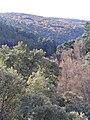 VistaGargantaSanLorenzo 2009December20 Habitus SierraMadrona.jpg