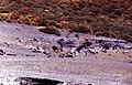 Vulcano-124-Blick in die Tiefe-Vieh-1986-gje.jpg