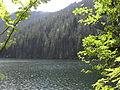 Vylet k Cernemu jezeru Sumava - 9.srpna 2010 189.JPG