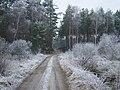 WILCZE ŁUGI 002 - panoramio.jpg