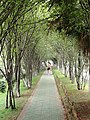 Walkway - Yunnan University - DSC02350.JPG