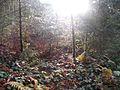 Wanderung im November - panoramio (36).jpg