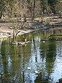 Weiher im Vogelpark Birkengarten Lorsch.jpg