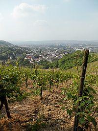 Weinbau bei Oberdollendorf, NRW.JPG