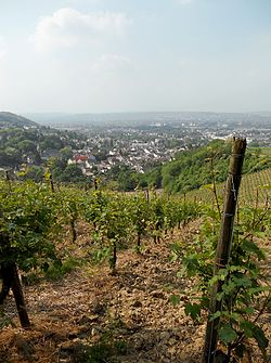 Oberdollendorf from the vineyards
