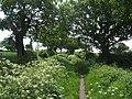 Well walked footpath - geograph.org.uk - 454055.jpg