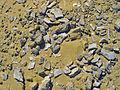Whale Fossil Fragments in Wadi Al-Hitan.jpg