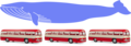 Whale measures as three buses.png