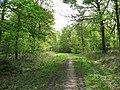 Whitwell Wood - Circular Drive - geograph.org.uk - 791273.jpg