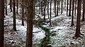 Wiehenhill forest.jpg
