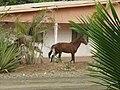Wild horses across the street.jpg