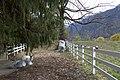 Wilderswil - panoramio - Patrick Nouhailler's… (56).jpg