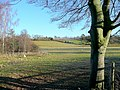 Winter sheep pasture 1 - geograph.org.uk - 1626872.jpg