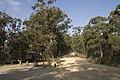Wombeyan Caves Road - panoramio - Maksym Kozlenko (9).jpg