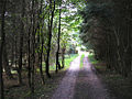 Woodland track in Snaizeholme - geograph.org.uk - 244561.jpg