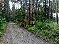 Wycinka lasu - panoramio.jpg