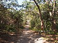 Wyrrabalong National Park - Wetland Trail - panoramio.jpg