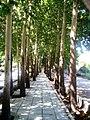 Yadbud street 2.jpg