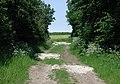 Zigzag Plantation - geograph.org.uk - 464179.jpg