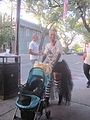 Zombie Tumble May 2013 Beverage Pram.jpg