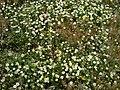 Çiçekler çimenler - panoramio.jpg
