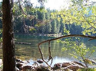 Plzeň Region - Černé Lake in Šumava, eastern bank
