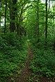 Želiv, cesta v lese.jpg
