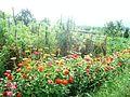Градина - panoramio (1).jpg