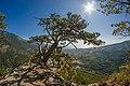 Дерево на фоне скалы Ставри-Кая.jpg