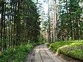 Лесная дорога meža ceļš - panoramio - Aleksandrs Timofejev… (14).jpg