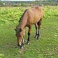Лошадь. Березники, Пермский край - panoramio.jpg