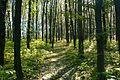 Ліс біля с. Мала Стружка.jpg