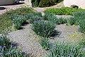 Національний ботанічний сад ім. М.Гришка Гравійний сад 02.jpg