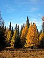 Осень в Зюраткуле.jpg