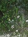 Растительность в балке в деревне Лучка.jpg