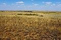 Рощица в овраге Ащесай - panoramio.jpg