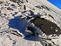 Снежные узоры. Эльбрус. Кабардино-Балкария.jpg