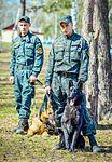 Собаки НГУ 4019 (19168602989).jpg