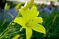 Цветы ботанического сада. - panoramio (3).jpg