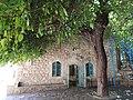 עץ התות בבית הכנסת העתיק בפקיעין.jpg
