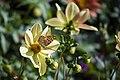 عکس از گلها و گیاهان باغ بوتانیکال تفلیس - گرجستان 46.jpg