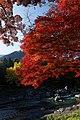 御岳渓谷 - panoramio.jpg