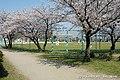 春の助松公園 - panoramio.jpg