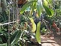 神代植物公園の温室 - panoramio.jpg