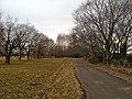 秋が瀬公園の冬 - panoramio.jpg